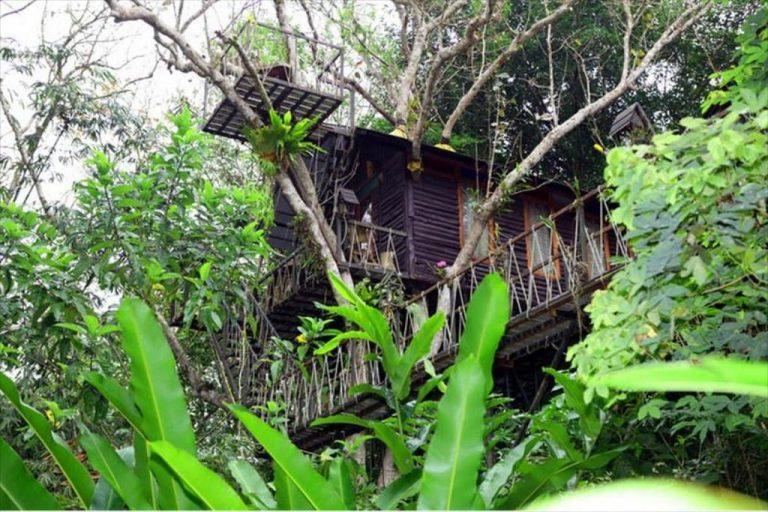 Khao-Sok TreeHouse